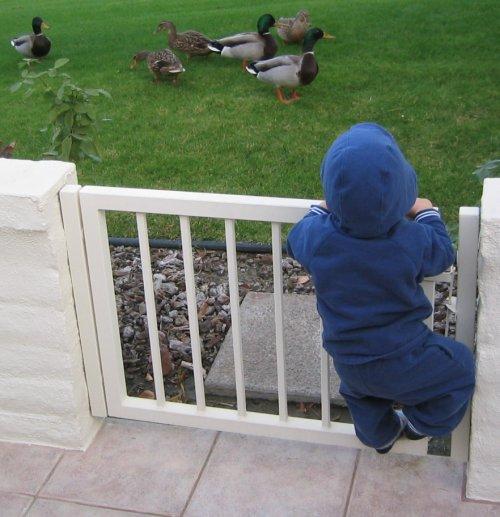 Duck Encounter