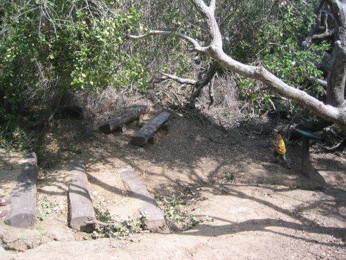 Fern Canyon Ampitheatre
