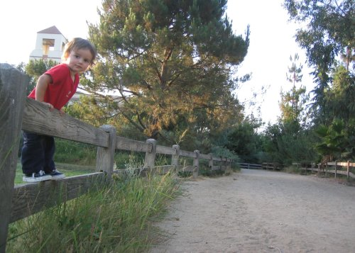 Sean on the fence