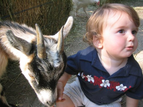 Sean met a billy goat today