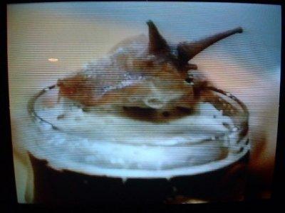 Snails should not drink beer