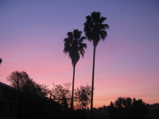 Palms at sunrise