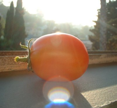 This is a tomato from our garden.